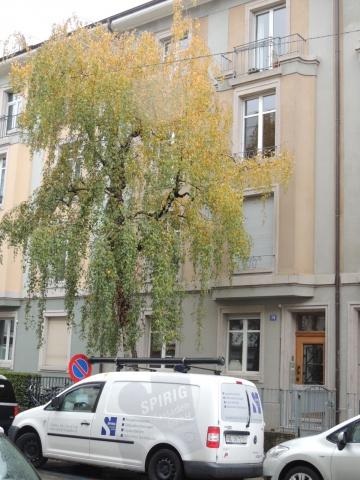 Baumgartnerhaus mitten in Basel