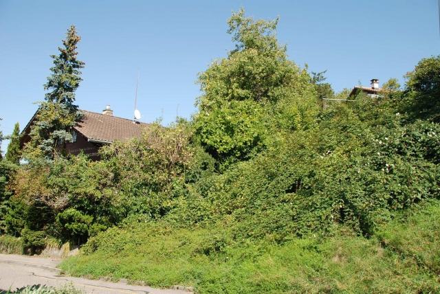Bauland für freistehendes Einfamilienhaus in Meiefeldquartie 12019736