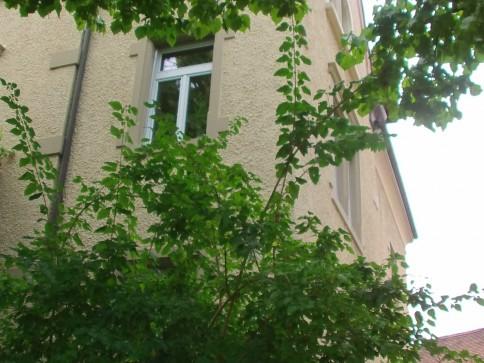 Jugendstil 4 -Z-Wohnung. Nähe Konstanz