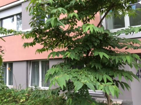 Praxis- oder Büroräumlichkeiten im Gryphenhübeliquartier (Kirchenfeld)