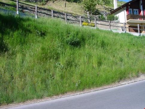 Voll erschlossenes Bauland in Törbel