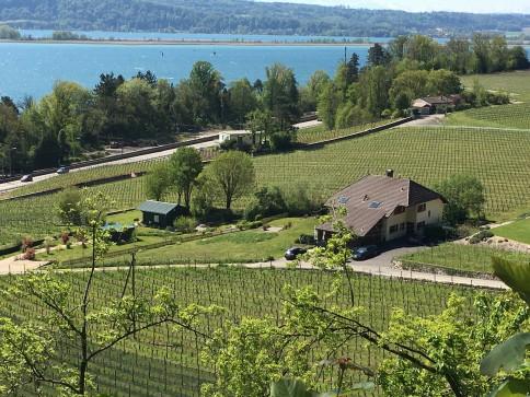 La Neuveville - Bel apprtement renové - vue lac