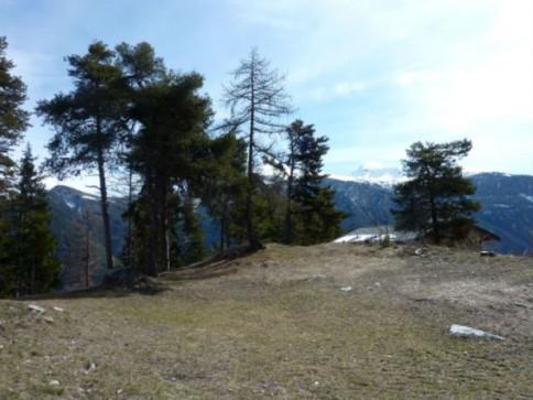 Vercorin - Plan Cerisiers