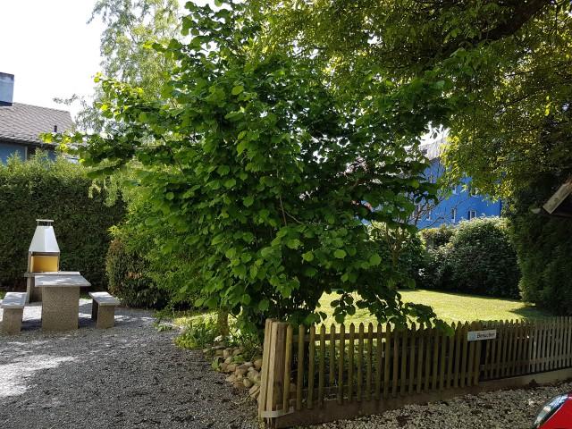 Garten mit Cheminee zur gemeinsamen Nutzung