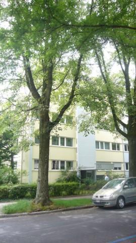 Hübsche 3.5-Zimmerwohnung im Breitenrain 27889259