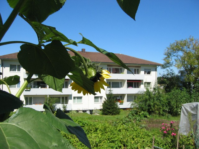 Willkommen daheim 20094115