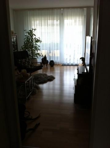 Hübsche 2,5 Zimmerwohnung mit Balkon und Einstellplatz 20844348