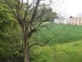 3-Zimmerwohnung mit Charme und Blick ins Grüne